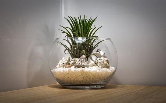 Usual blunders to prevent when caring for terrariums- terrarium team building Singapore